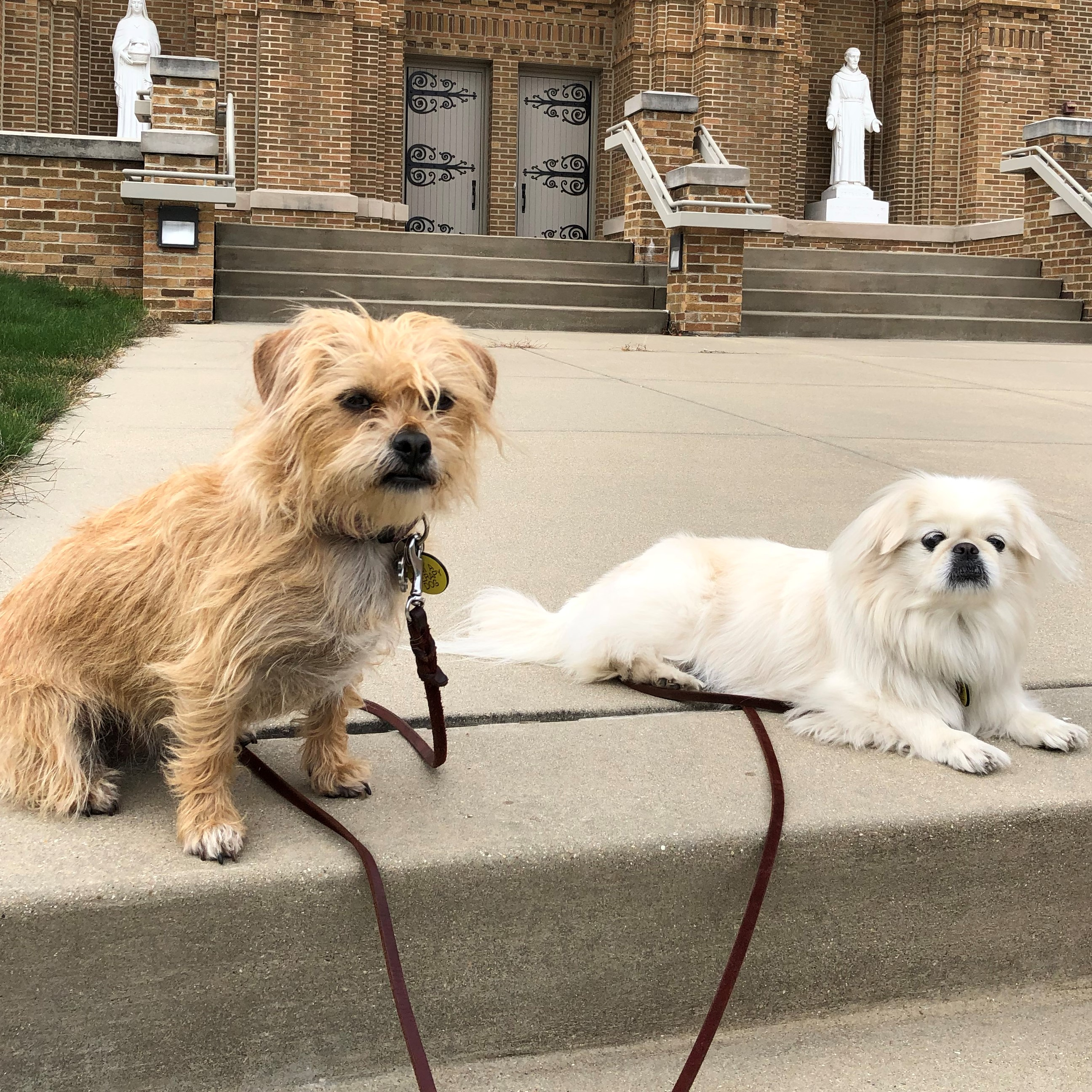 Photo of Sophie and Amber, small TDI dogs laying on steps.